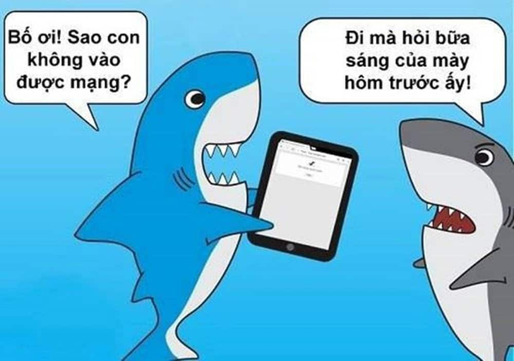 Cá mập cắn cáp